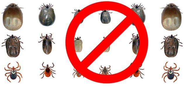 No ticks on dogs