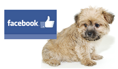 morkies-on-facebook