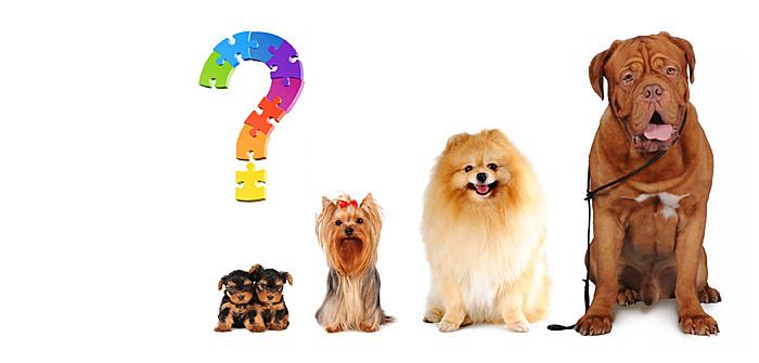 Small dog or big dog?