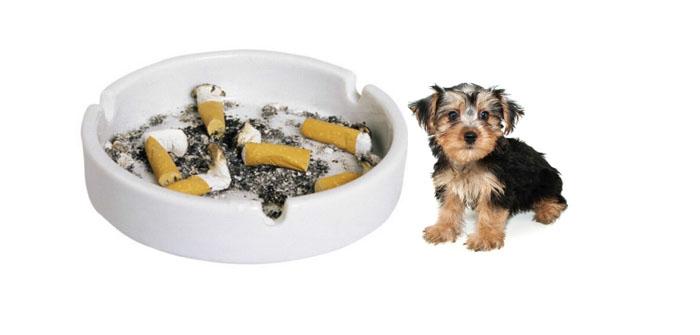 Smoking and dogs