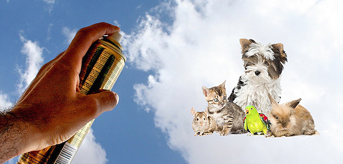 sprays-and-your-pets-featured-pic