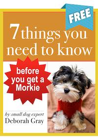 FREE REPORT- 7 THINGS YOU NEED TO KNOW BEFORE YOU GET A MORKIE.pages