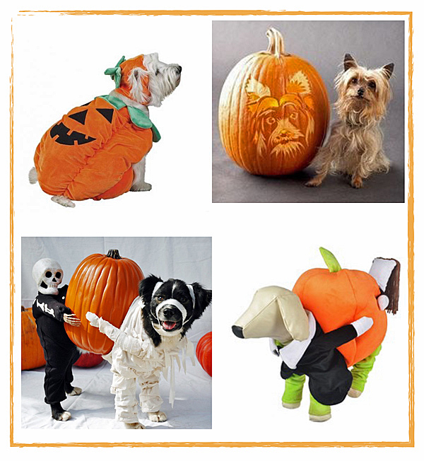dog pumpkin costumes