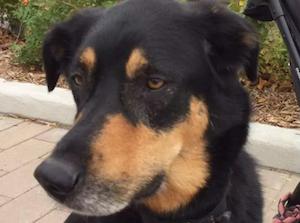 sage-stolen-dog