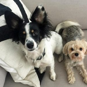 two-of-the-missing-16-dogs