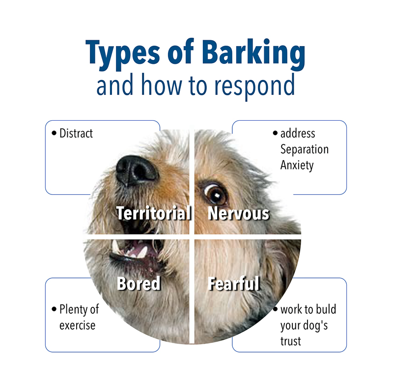 Four types of barking